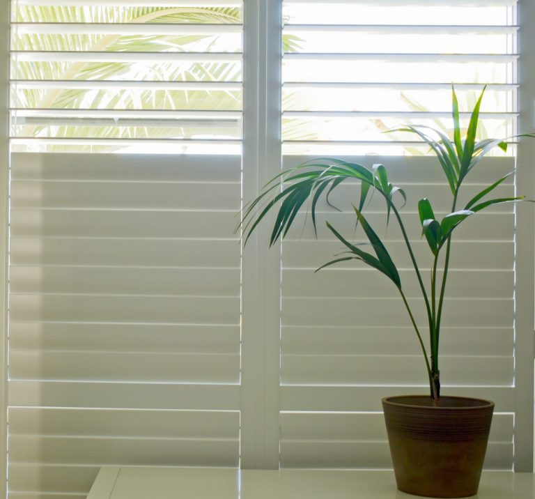 Close-up of white wooden plantation shutters with palm tree plant